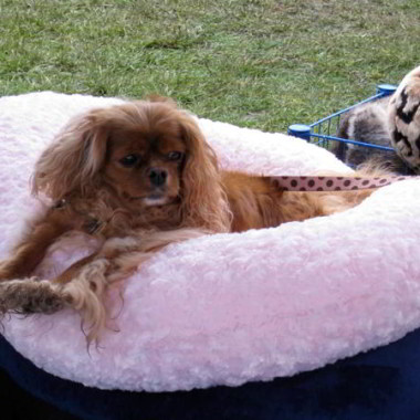 Pink Rosecuddle Dog Bed